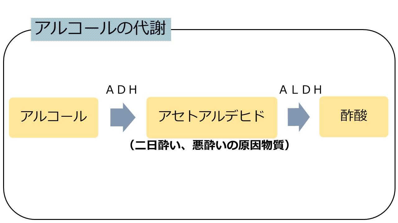 アルコールの代謝